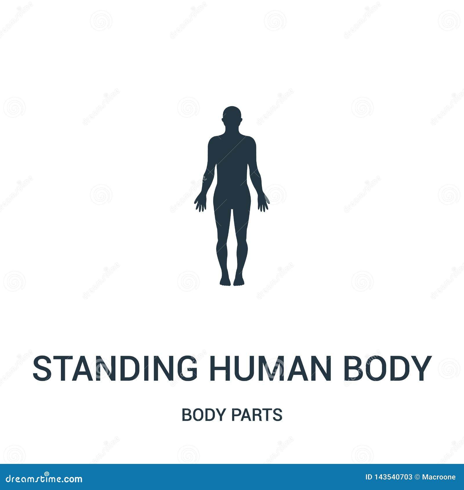 Stående vektor för människokroppkontursymbol från kroppsdelsamling Tunn linje symbol för översikt för anseendemänniskokroppkontur