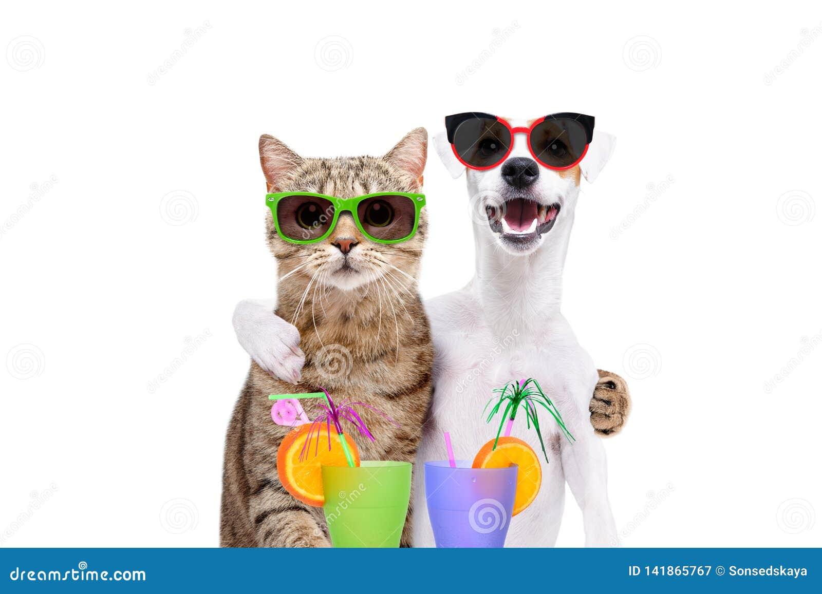 Ståenden av en hund Jack Russell Terrier och kattskotten som är rak i solglasögon och att krama sig som rymmer coctailar tafsar i