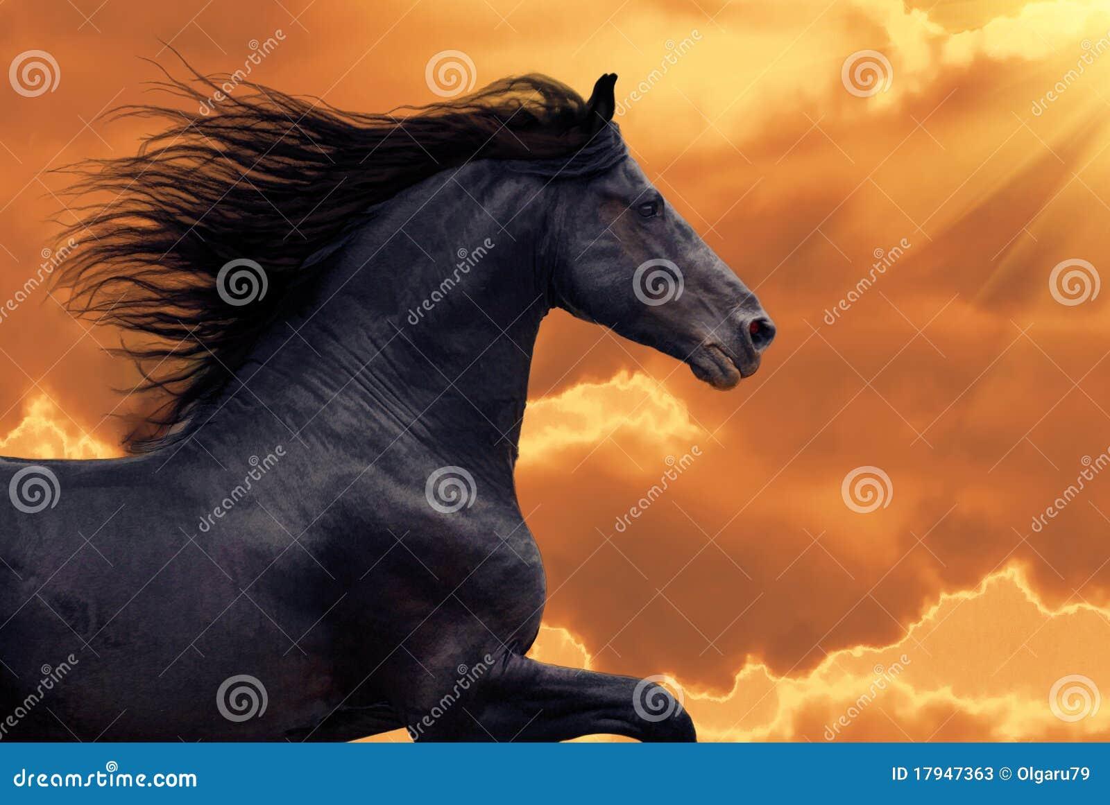 Ståenden för frisiangalopphästen kör solnedgång