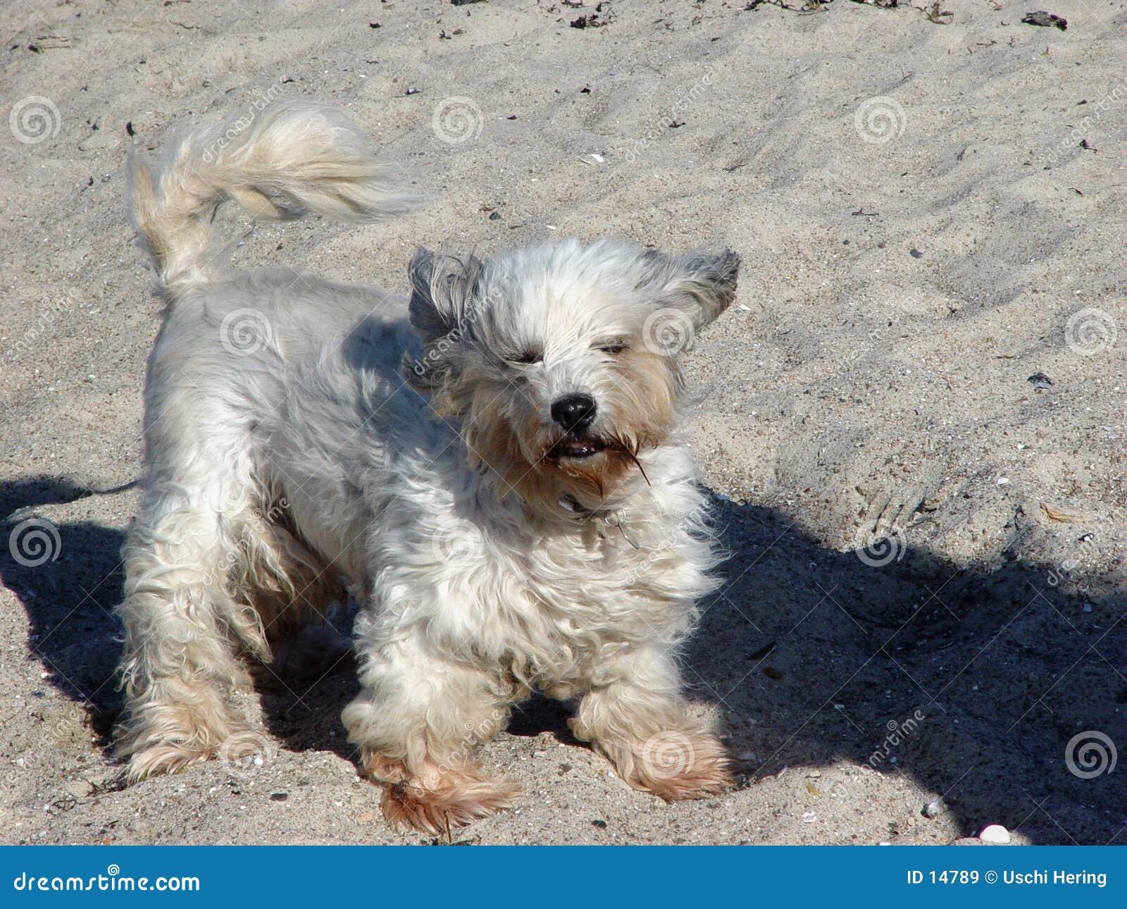 Stürmischer Hund