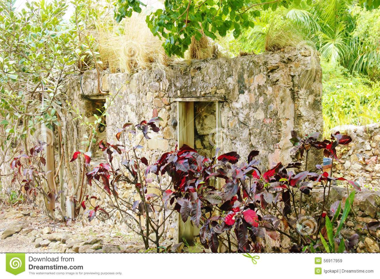 St Croix Usvi Botanical Garden Croton Near Ruins Stock Photo Image 56917959