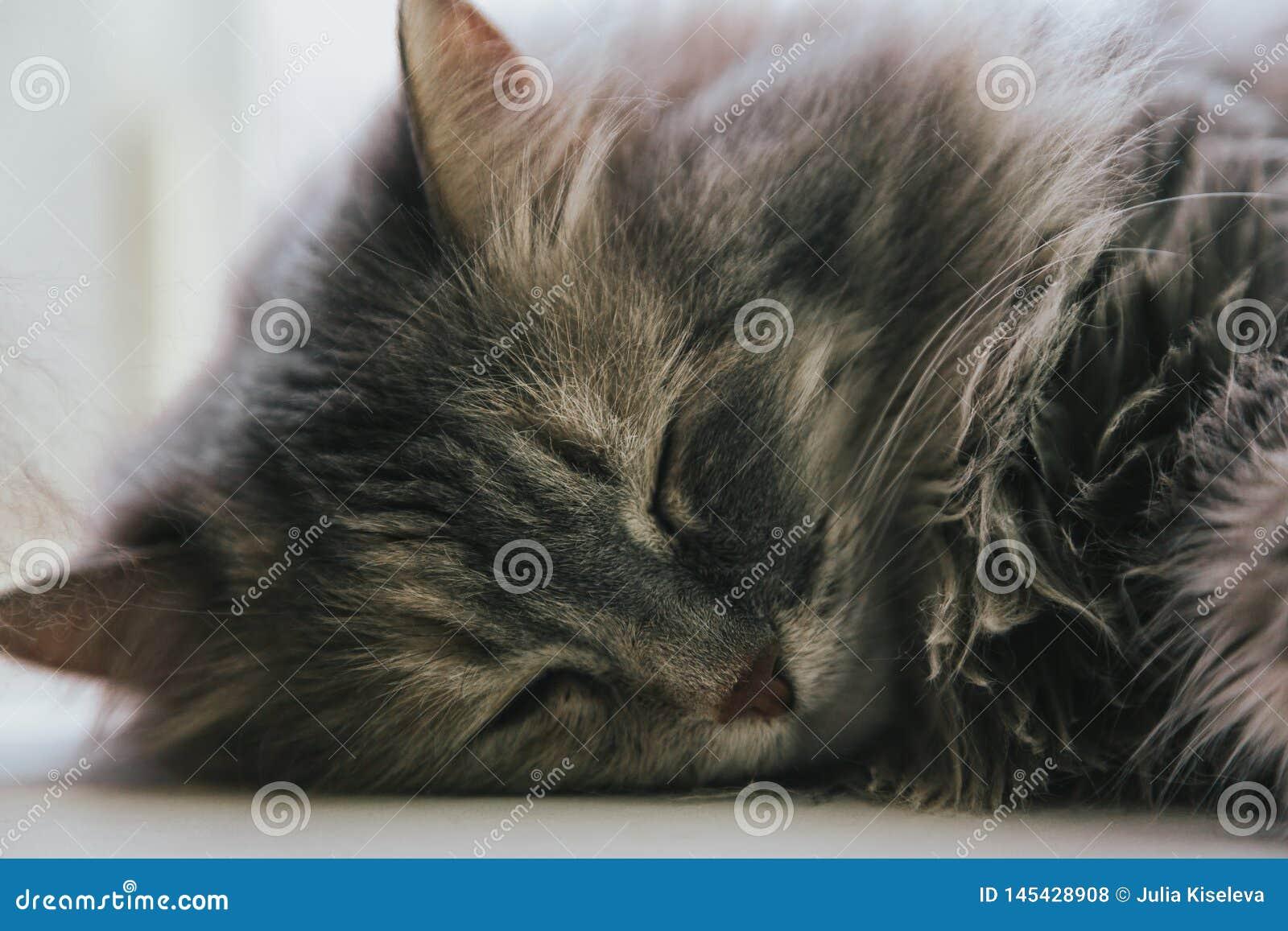 St?ende av gr?tt sova f?r katt