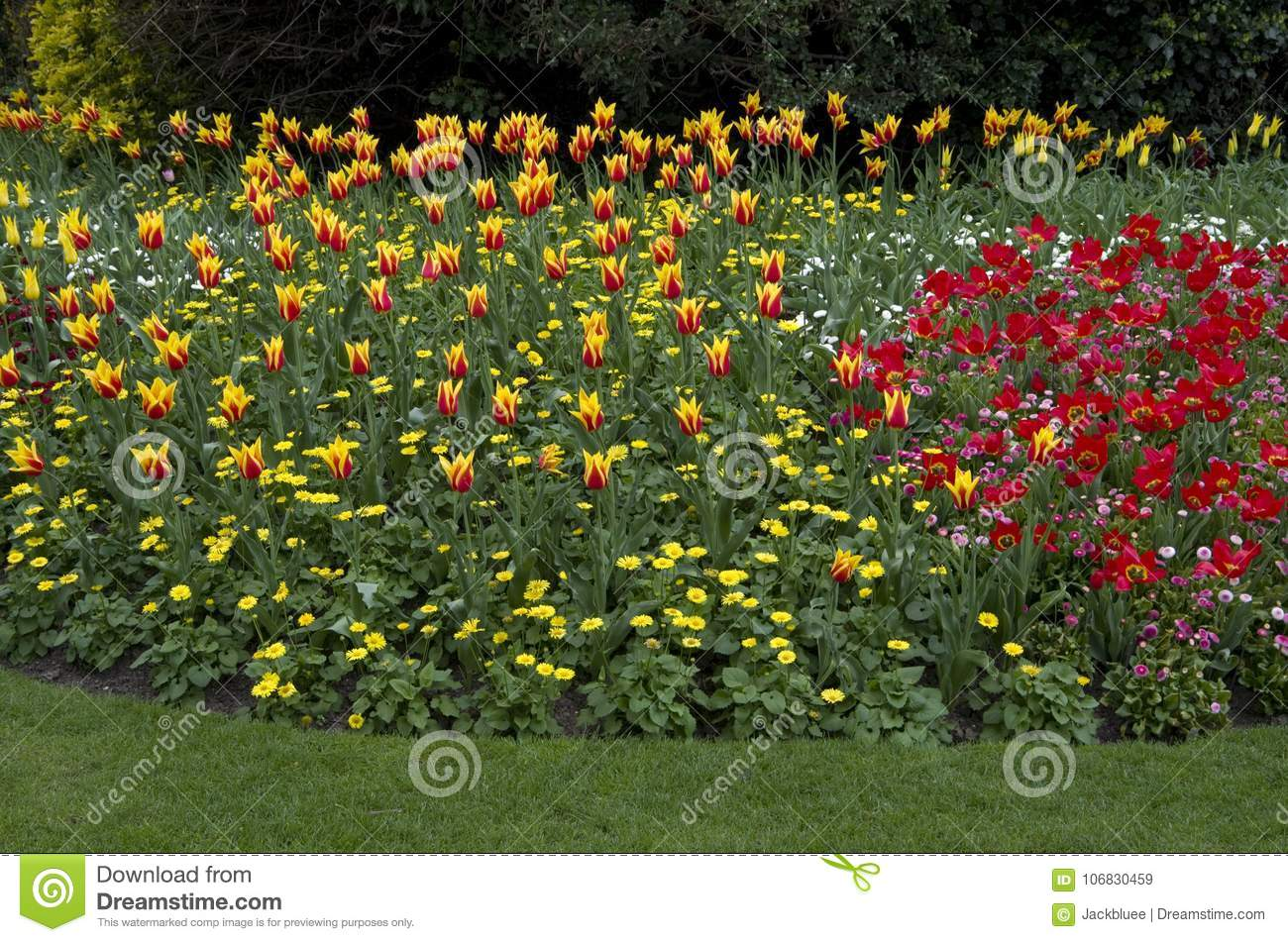 St James Park London Spring Flowers Stock Image Image Of Palace