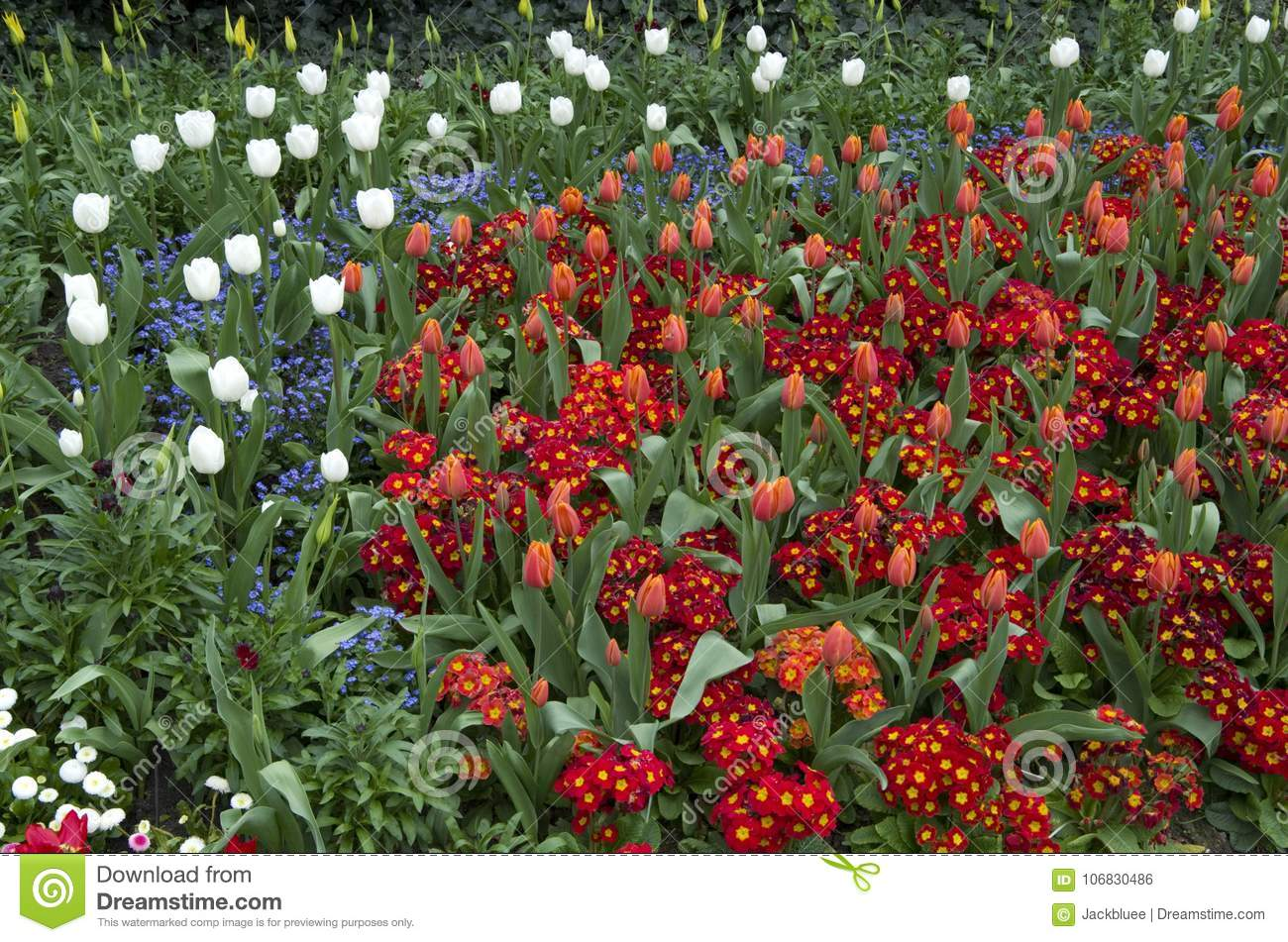 St James Park London Spring Flowers Stock Photo Image Of Mixed