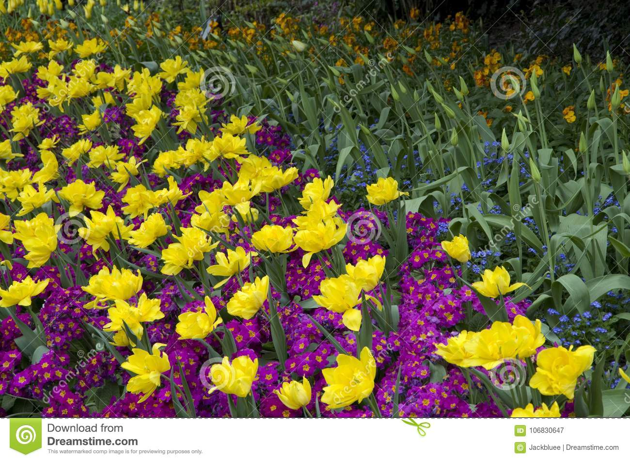 St James Park London Spring Flowers Stock Image Image Of Pink