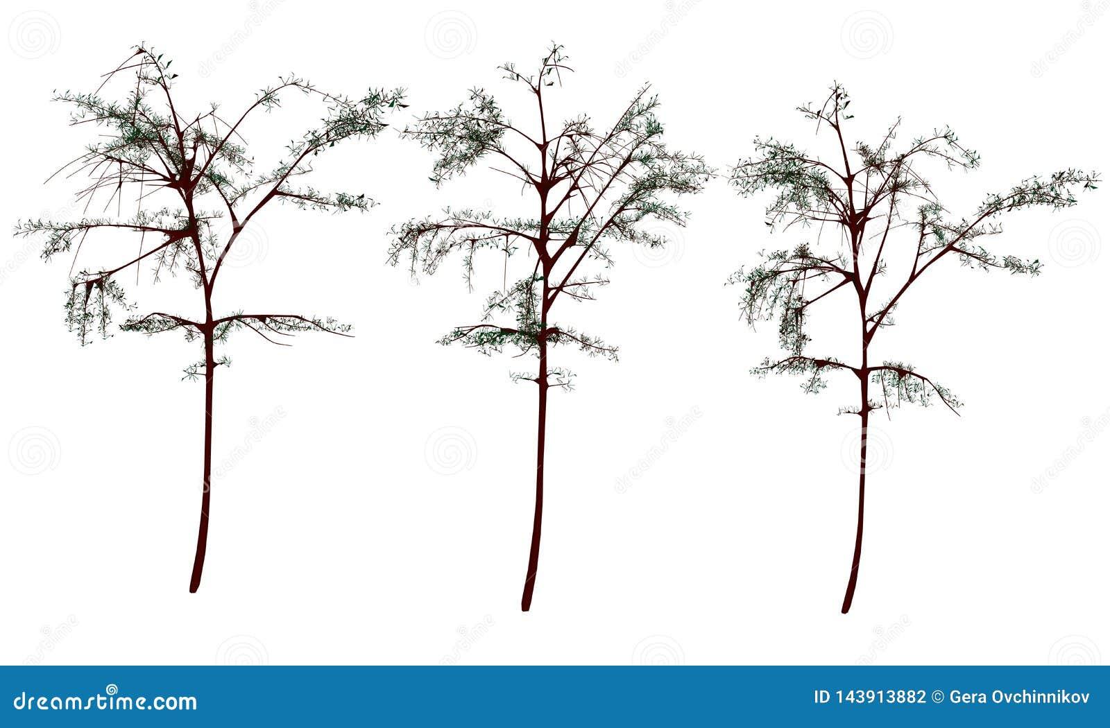St?ll in med tr?d Realistiska träd som isoleras på vit bakgrund ocks? vektor f?r coreldrawillustration