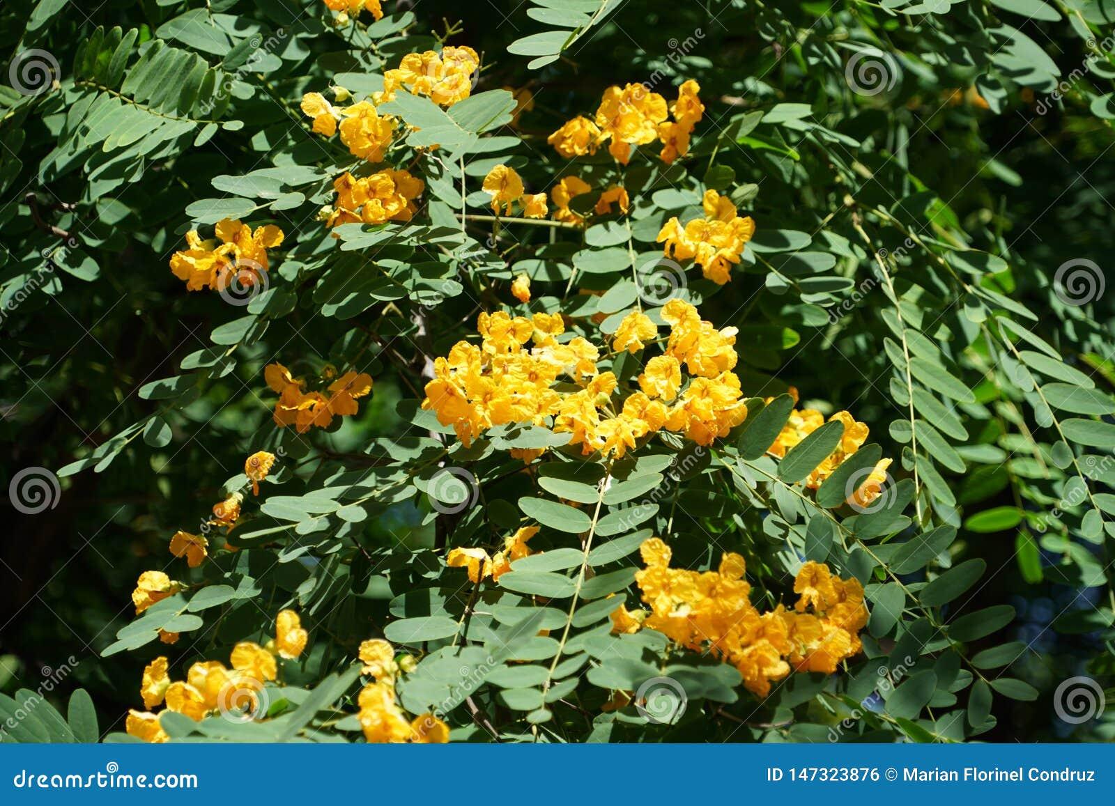 St?ng sig upp med specifika blommor f?r madeiran