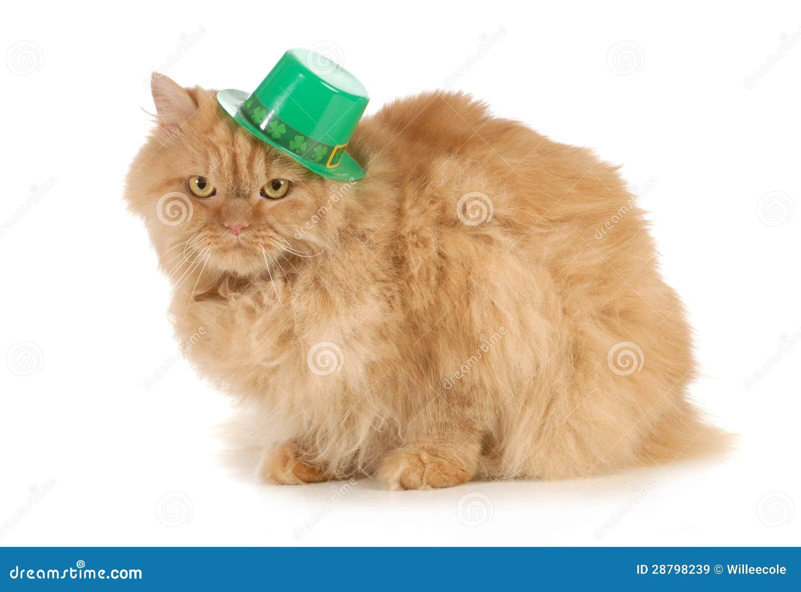 St Patricks日猫
