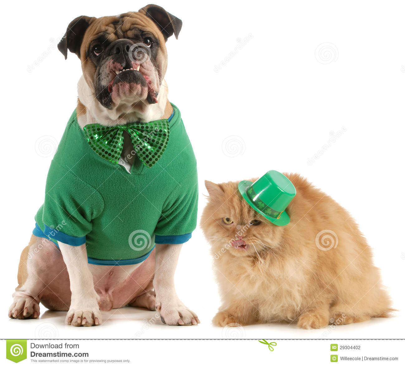 Funny St Patricks Day Dog Pictures