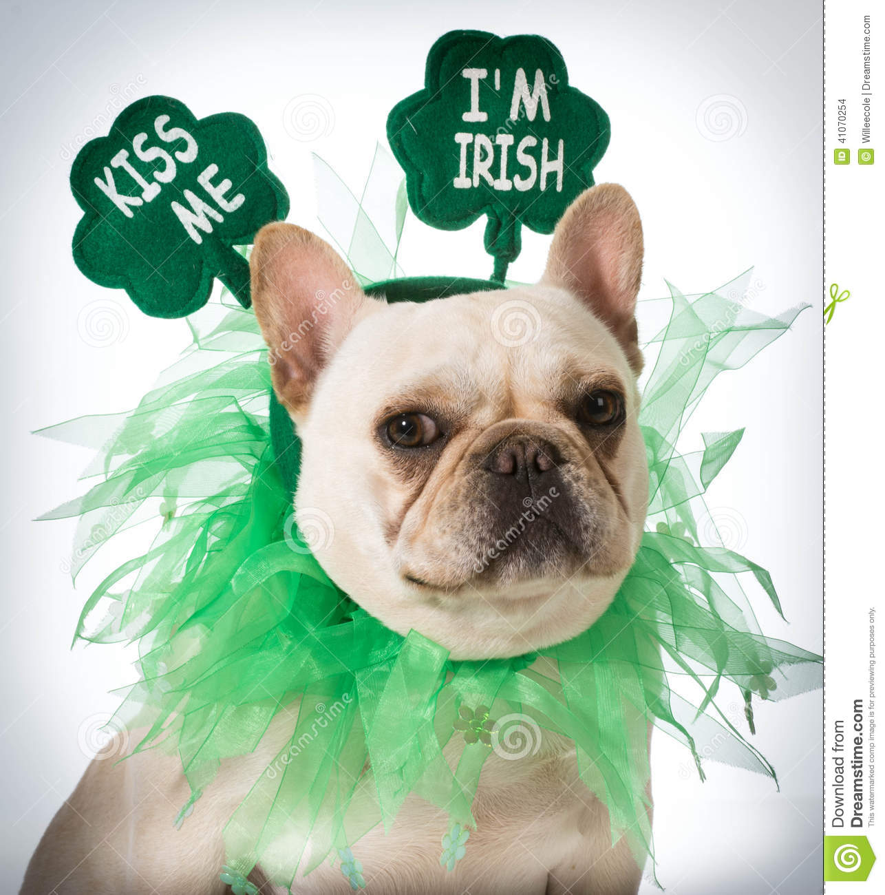 St Patricks Day Dog Stock Photo - Image: 41070254