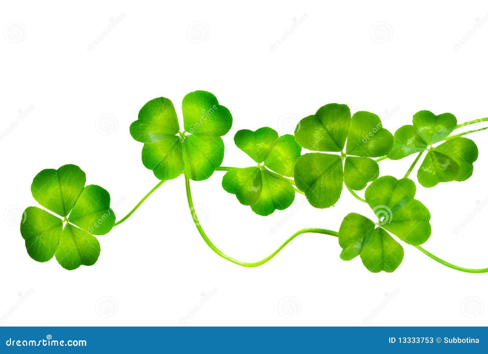 St.Patricks Day Shamrock Stock Photos - Image: 13333753