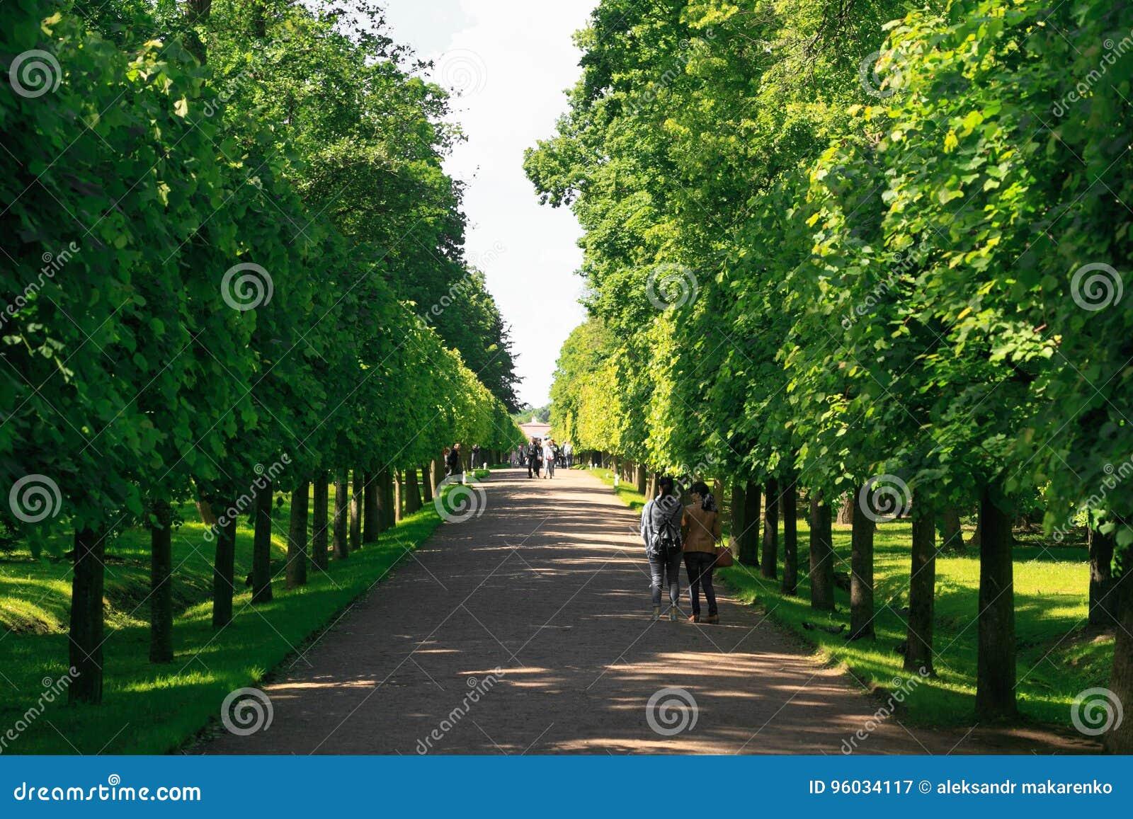 St Petersburg Rosja, Czerwiec, - 28, 2017: Zielona aleja w Peterhof w St Petersburg petersburg