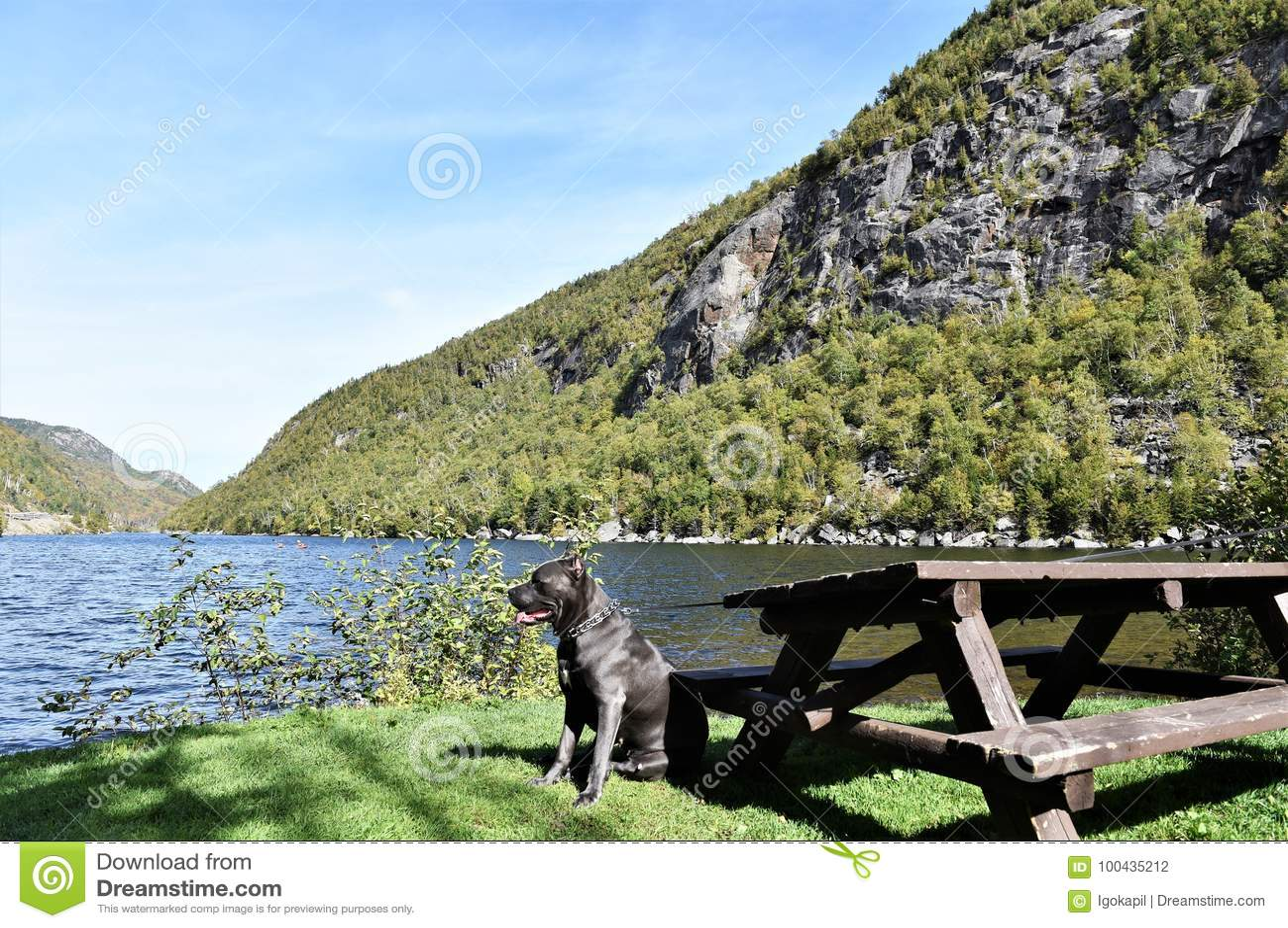 Staat- New-Yorkkaskadensee-Essex County Hund