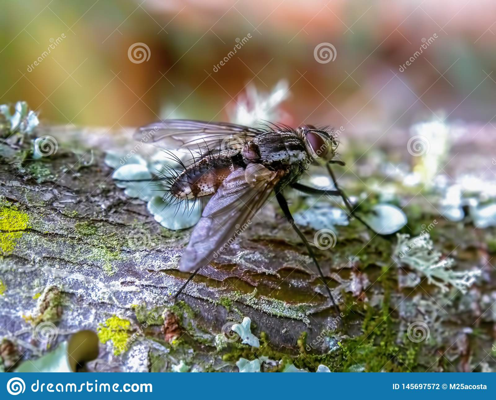 Stable fly standing on a tree branch