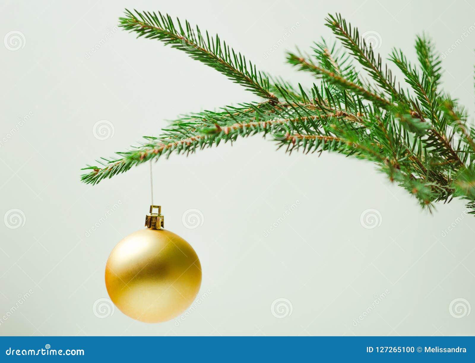 Weihnachtsbaum Ast.Stacheliger Weihnachtsbaumast Auf Einem Hellen Hintergrund Mit Einem