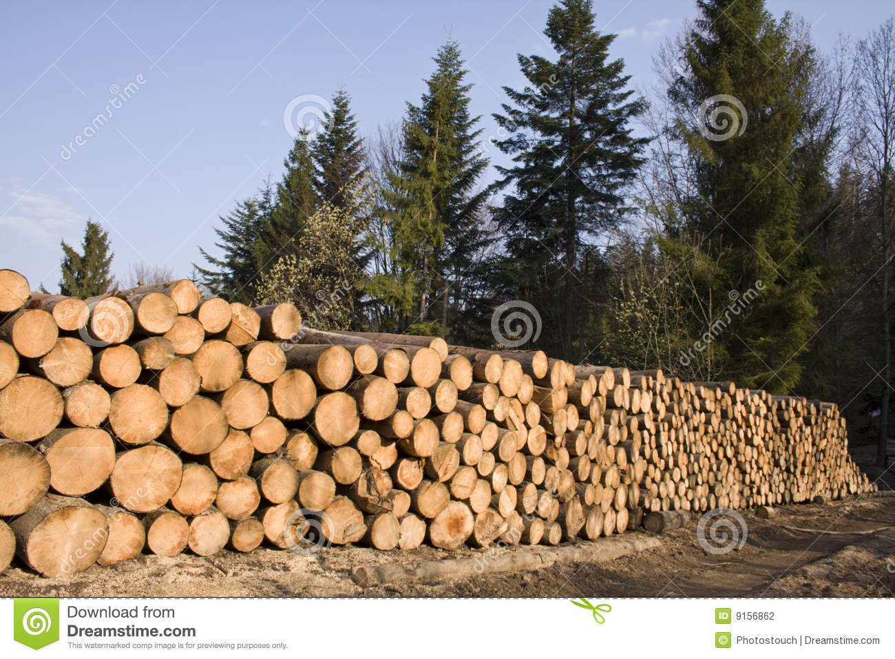 Stack of pine tree wood in forest stock photography for Pine tree timber