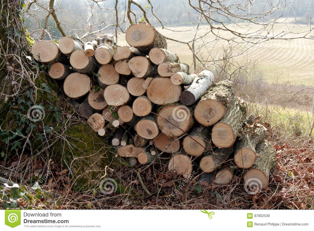 Stack Of Wood For The Fireplace Stock Image Image Of Forestry