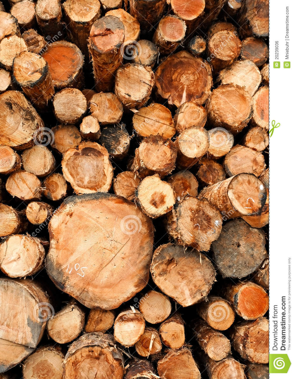 Stacked cut raw timber wood logs stock photo image