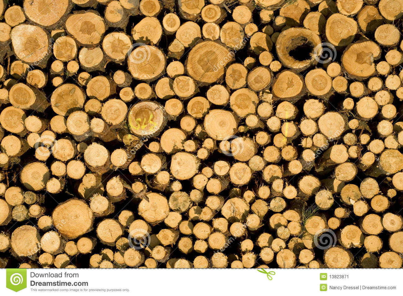 Stacked timber logs biomass stock image