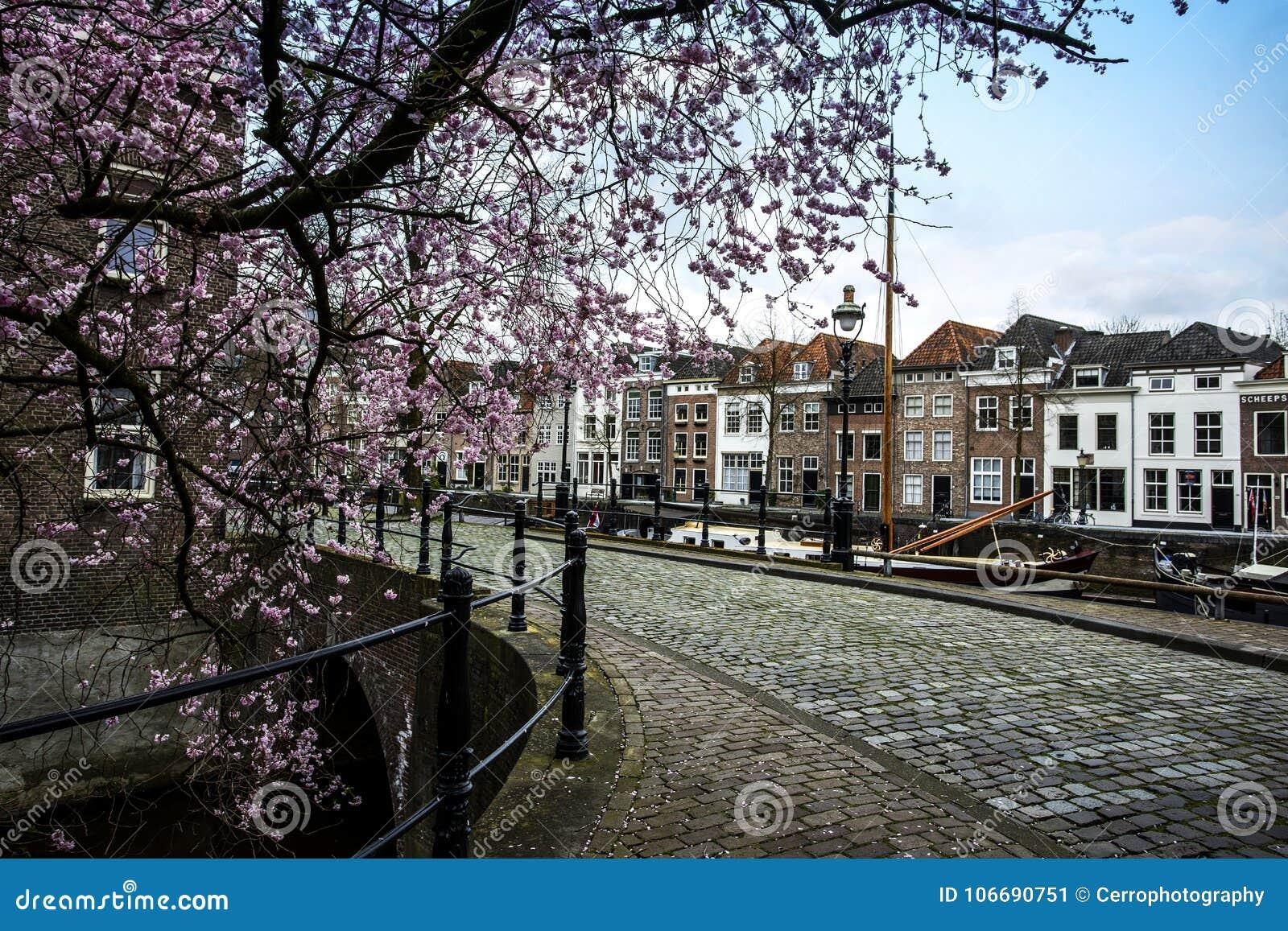 Stad in Nederland met mooie oude huizen en een roze boom