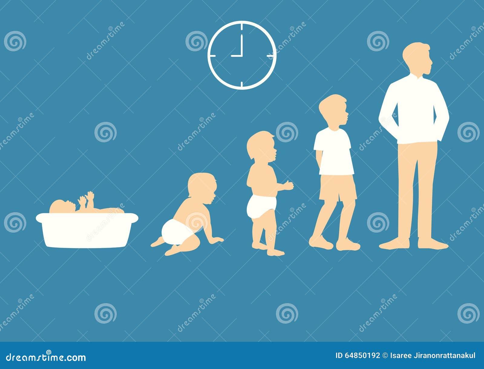 Stadia van het groeien van baby aan de mens
