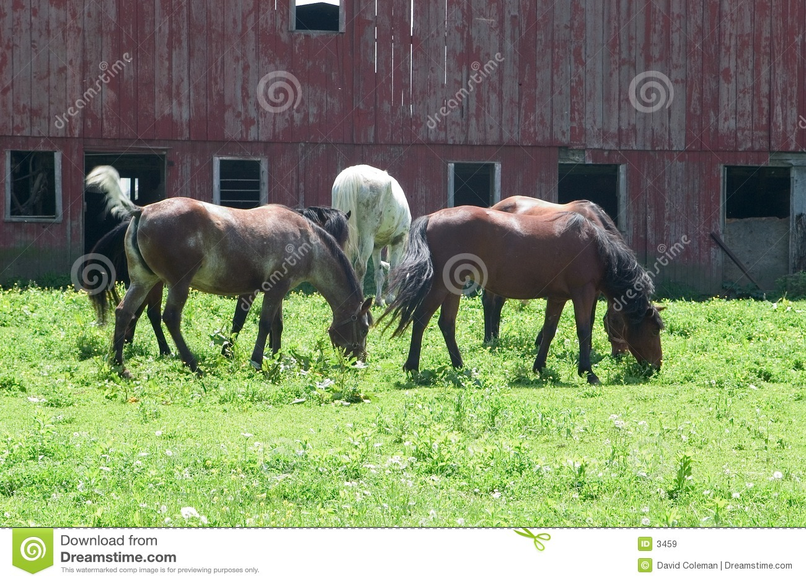 Stado koni pastwiska