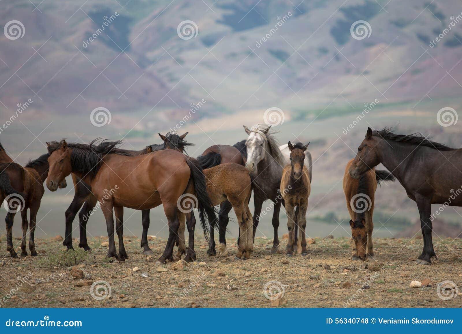 Stado konie pasa w łące