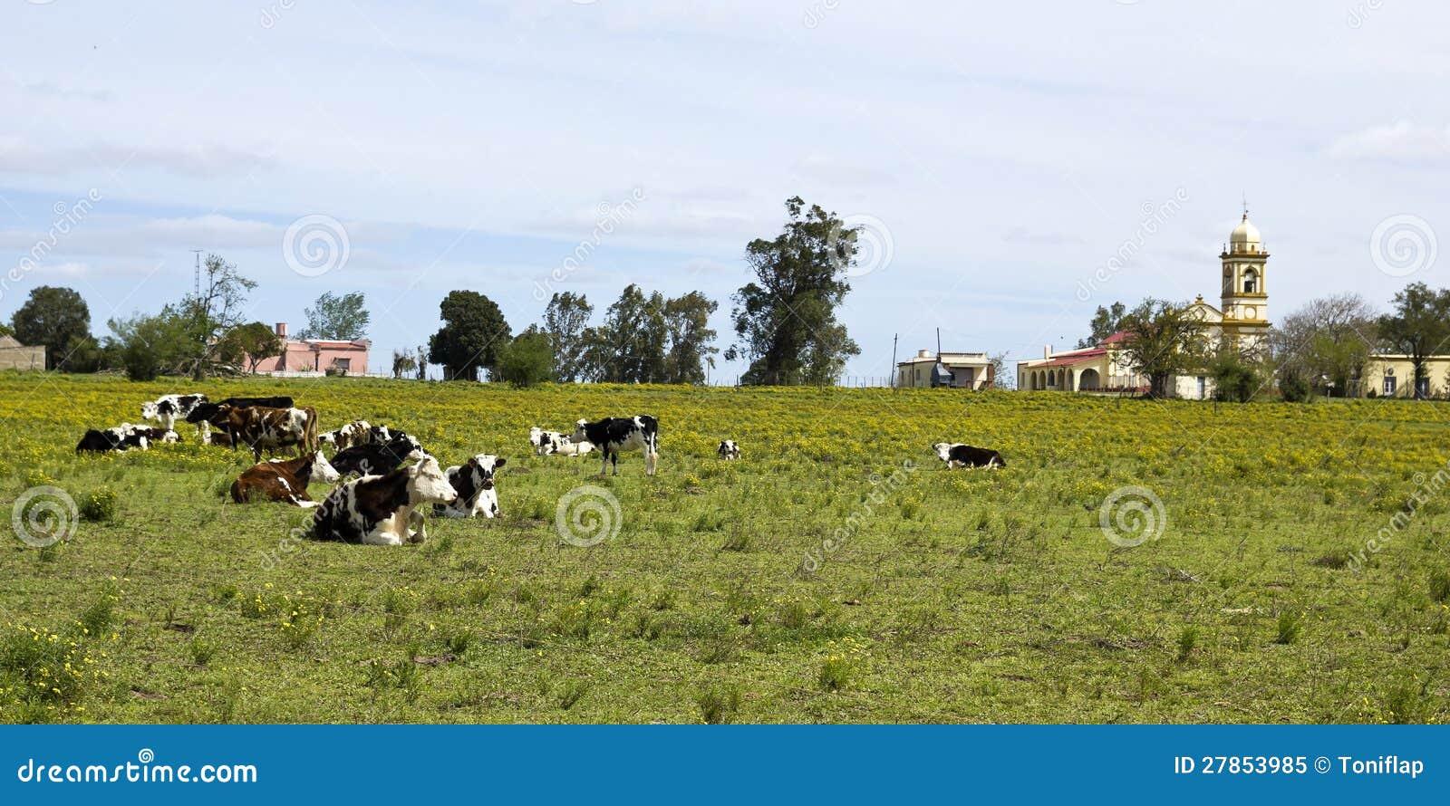 Stado krowy target583_0_ w Urugwaj.