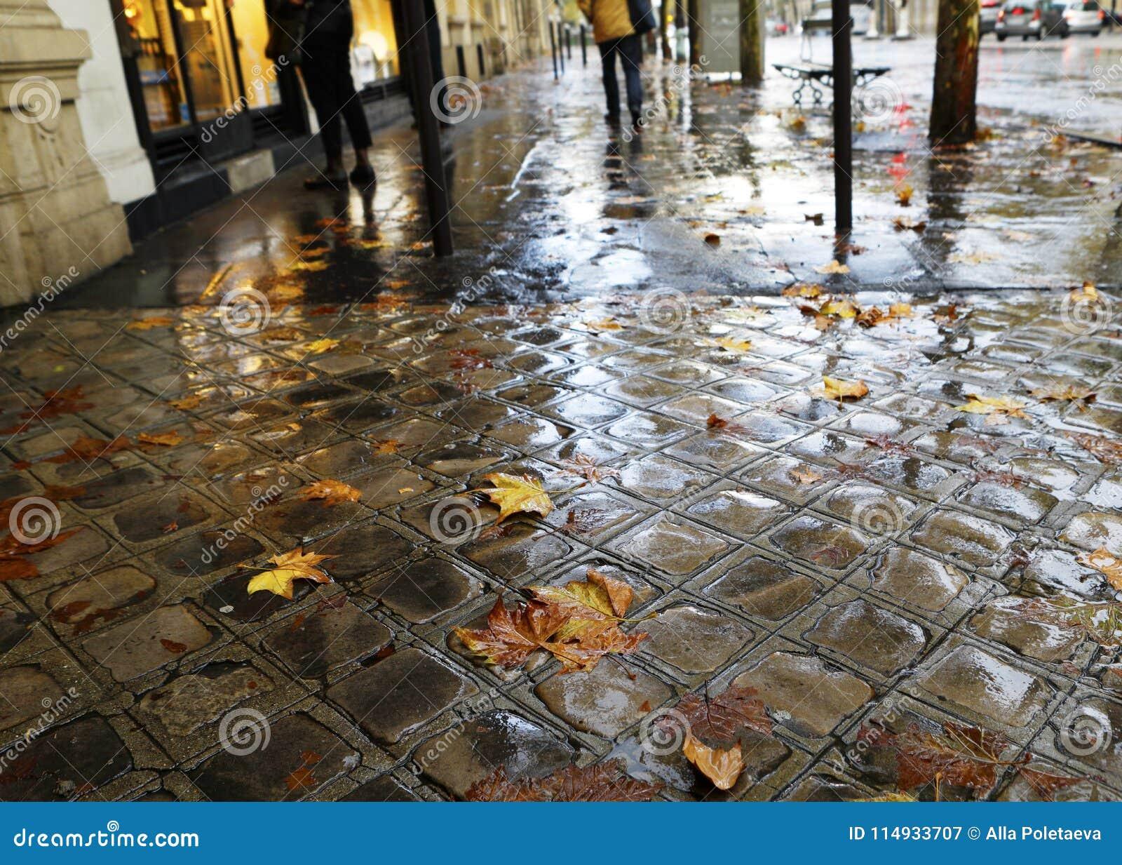 Stads- bakgrund med höstsidor på våt trottoar