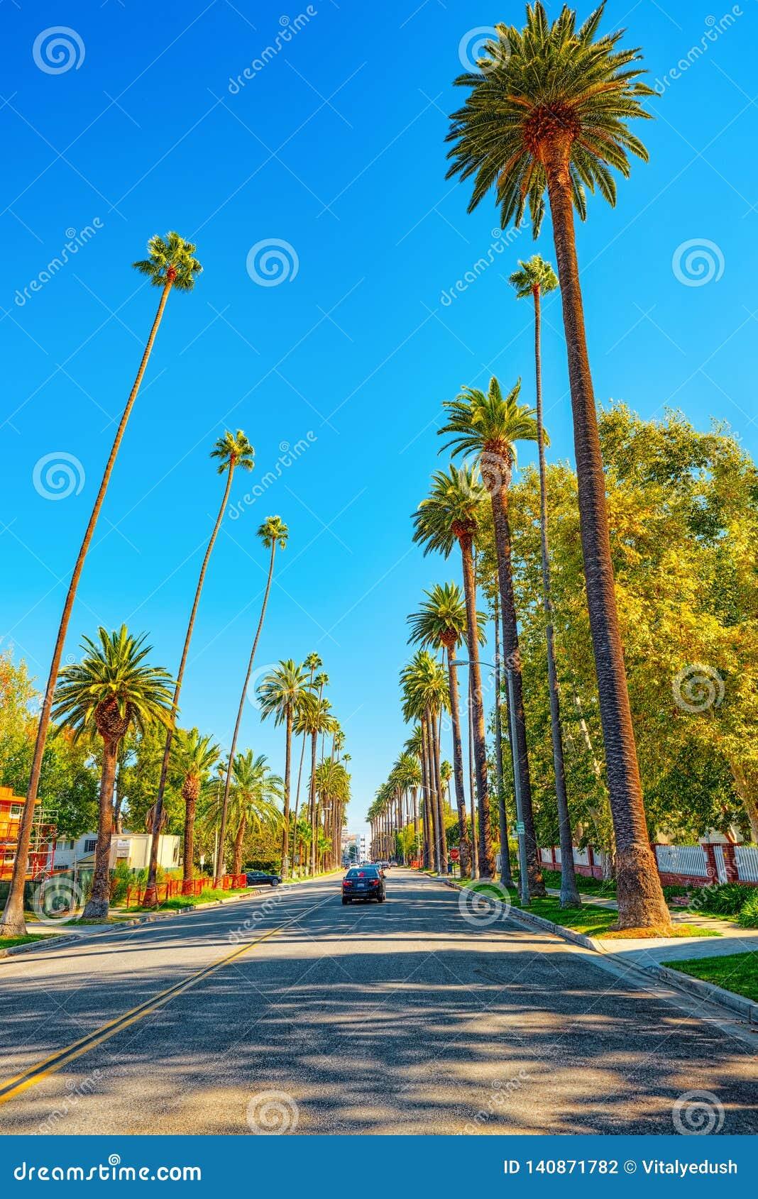 Stads- sikter av det Beverly Hills området och de bostads- byggnaderna på Hollywoodet Hills