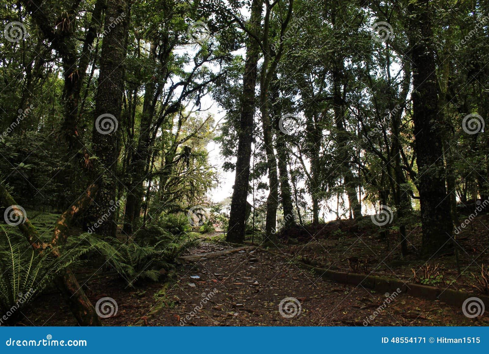 Stads- skog