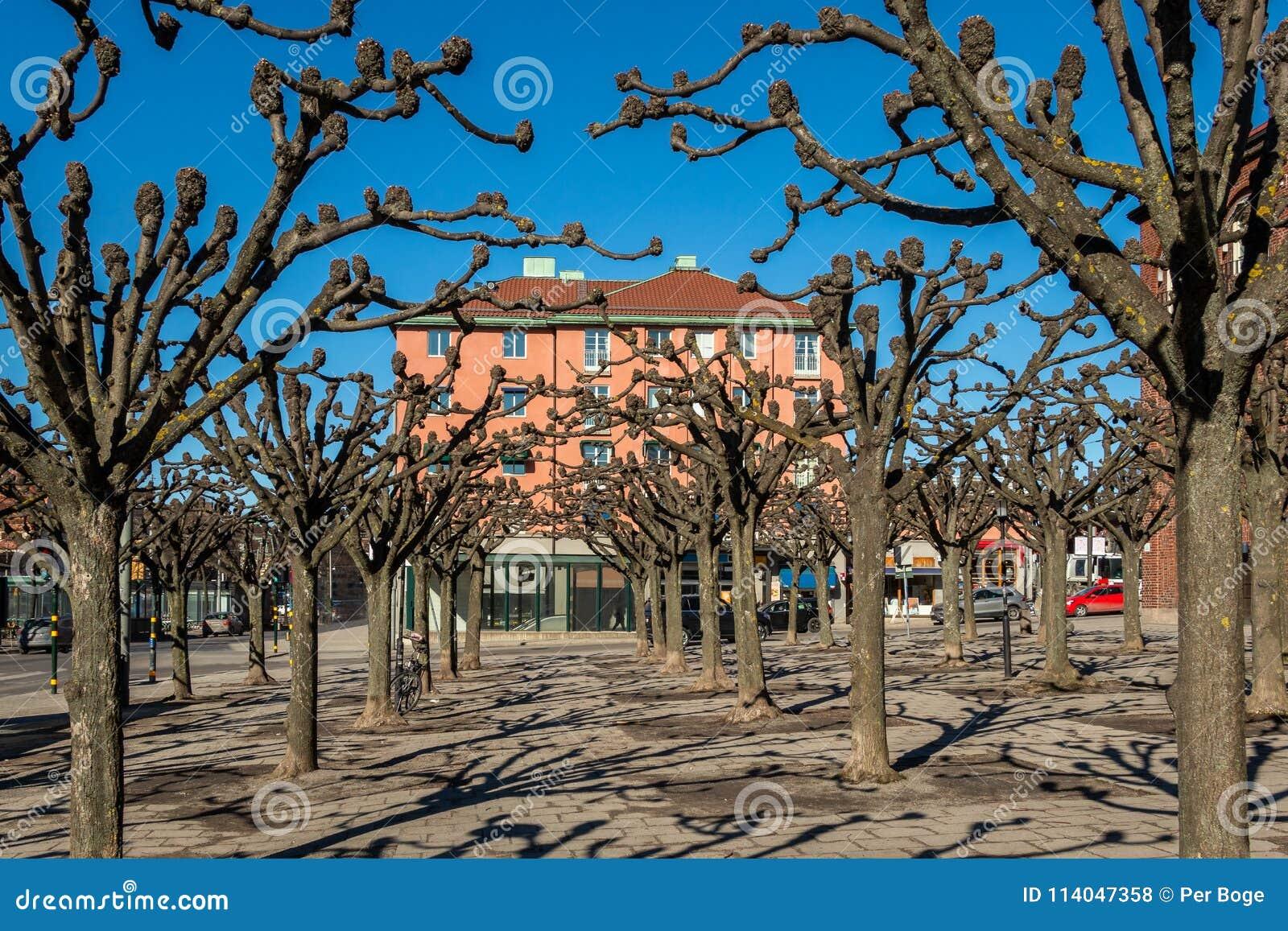 Stadsfyrkant med många beskar träd och byggande tidig vår