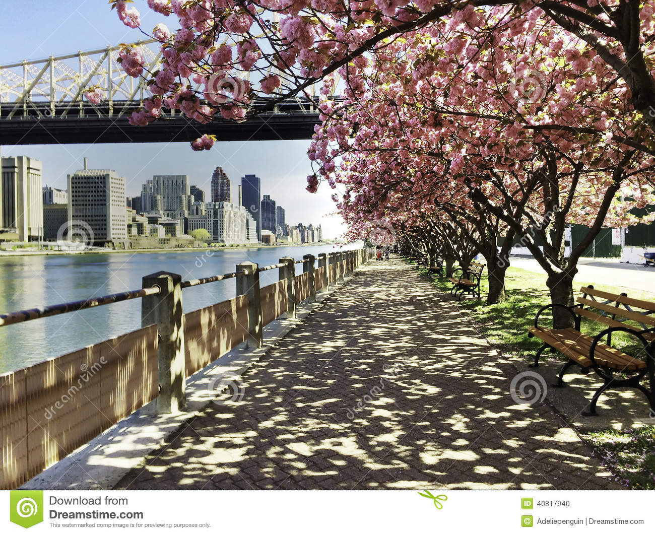 Stadsmening met Cherry Blossoms, New York