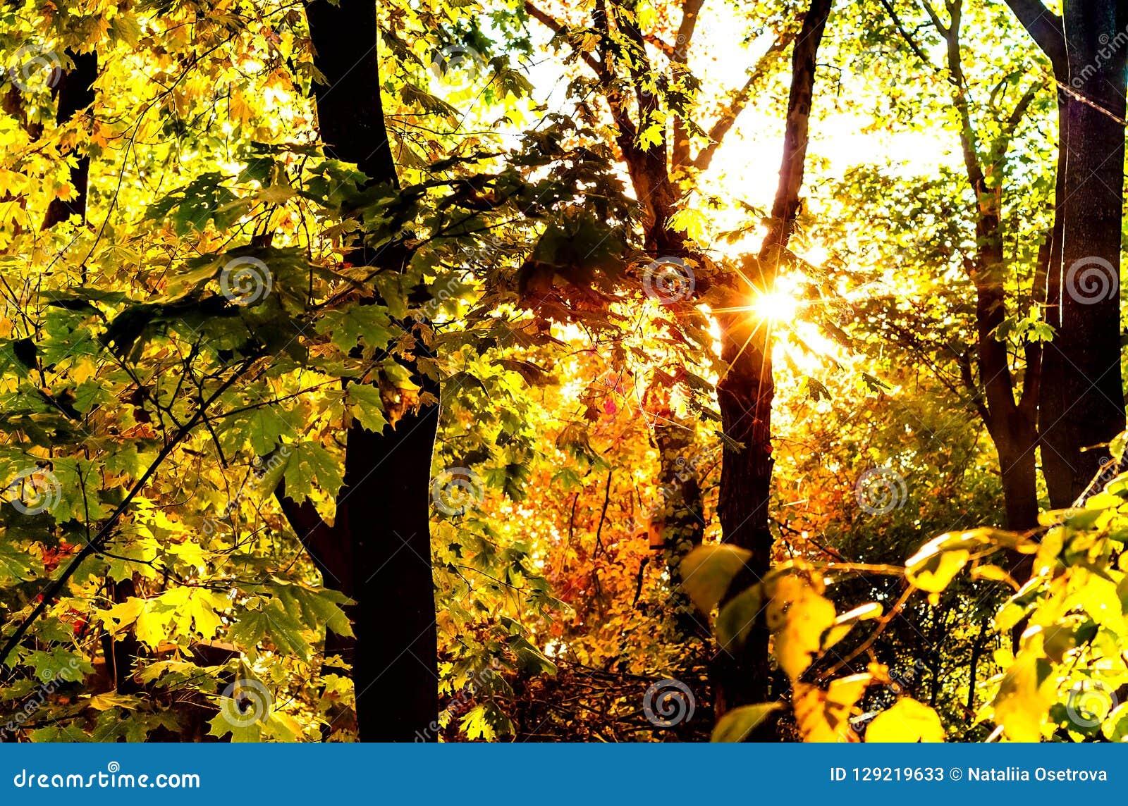 Stadspark, zonnestraal door de bomen Kiev, de Oekraïne, exemplaarruimte