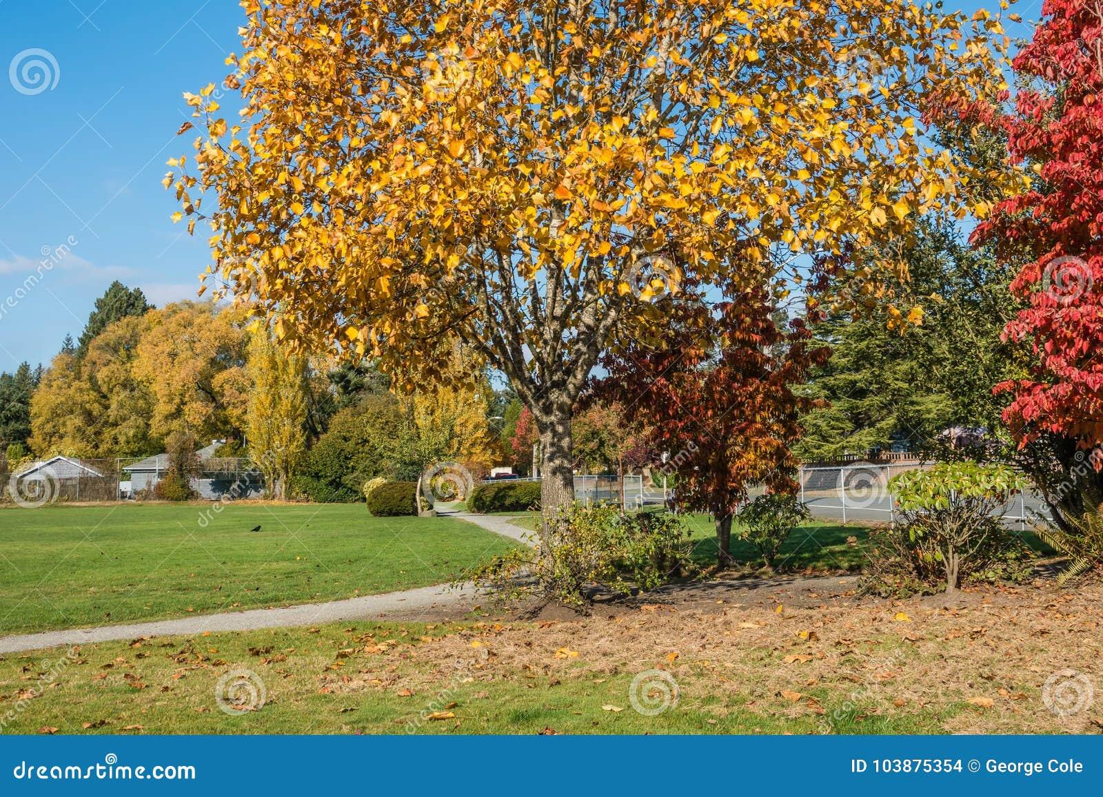 Stadt-Park in Herbst 4