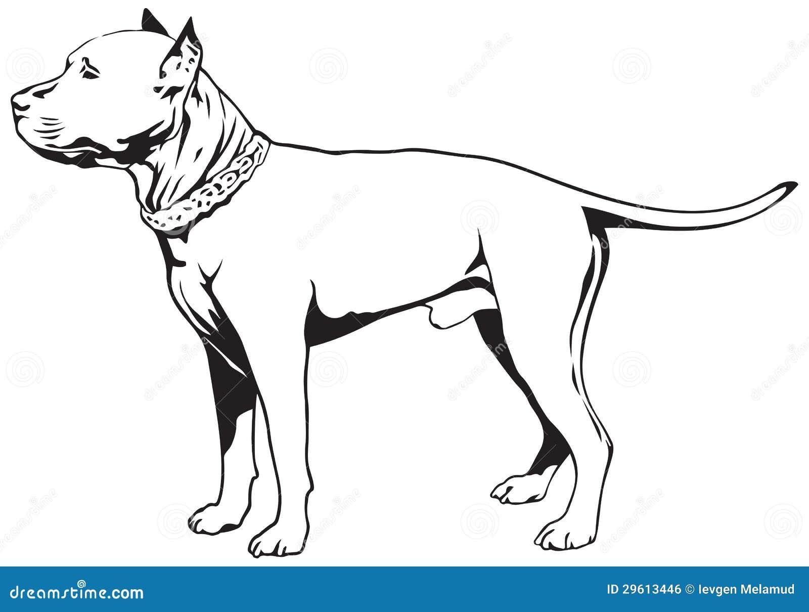 Staffordshire Bull Terrier Dog Stock Vector Image 29613446