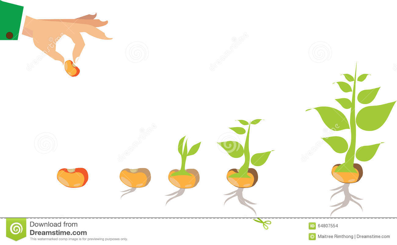 Stock Illustration Stages Growth Plant Seed To Tree Treer Image64807554 on Plant Life Cycle Print