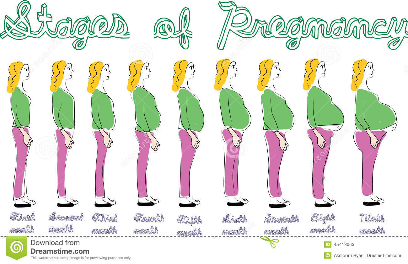 Stages Of Pregnancy Stock Illustration - Image: 45413063
