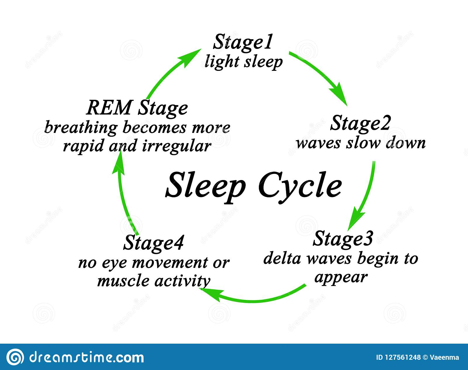 Stages Of Sleep Cycle Stock Illustration  Illustration Of Delta