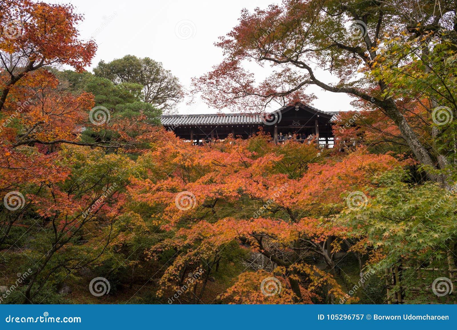 Stagione di autunno a Tofukuji Kyoto Giappone