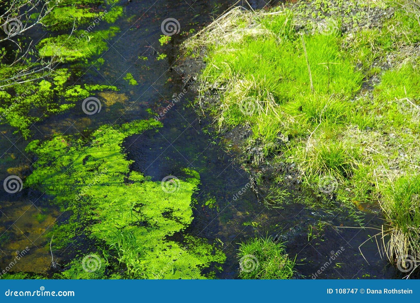 Stagnant Creek