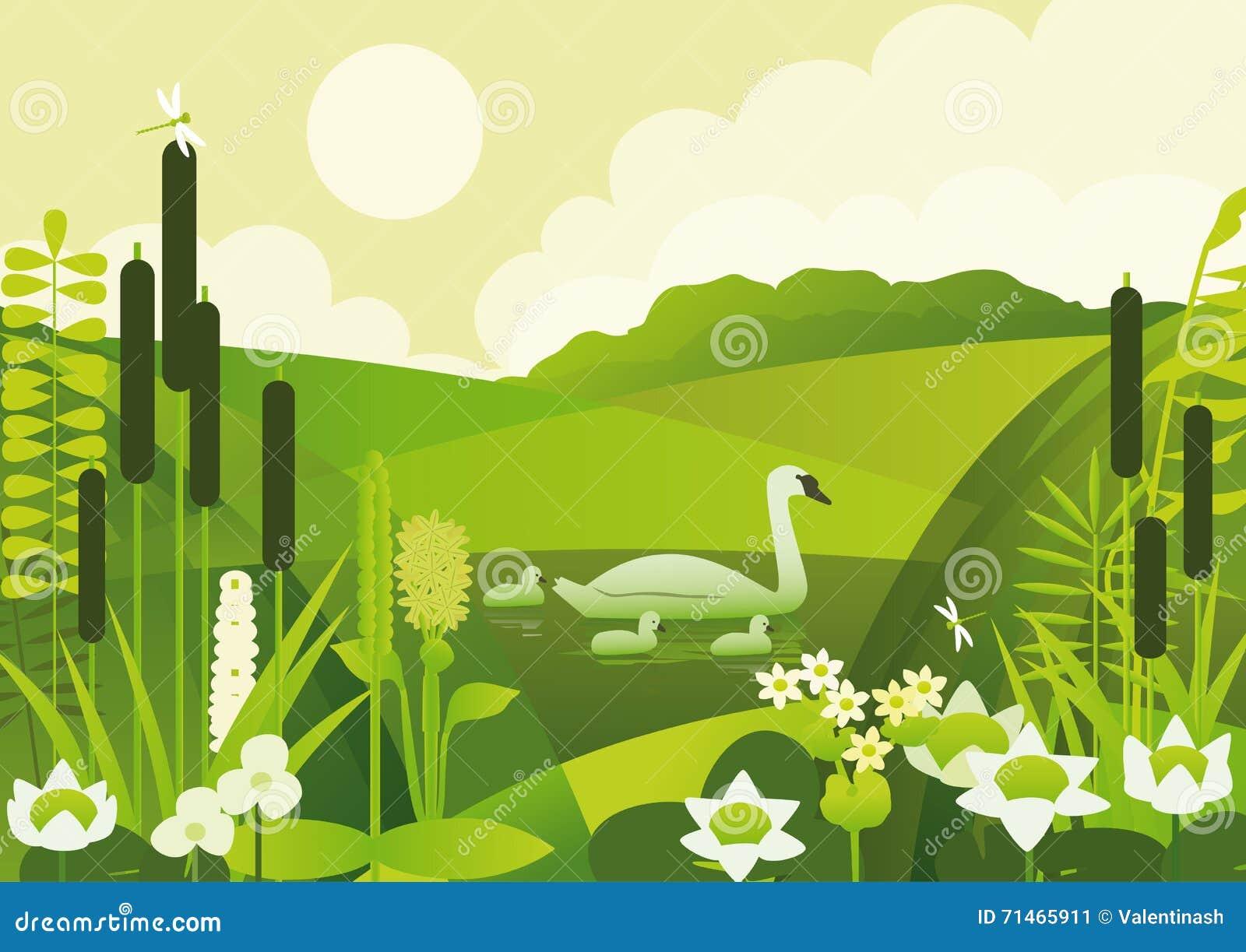 Stagno con le piante acquatiche ed i cigni illustrazione for Piante da stagno