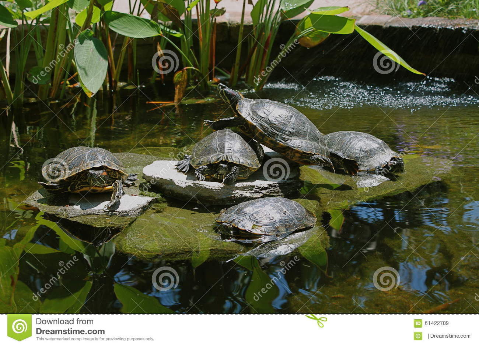 Stagno della tartaruga immagine stock immagine di for Stagno artificiale per tartarughe