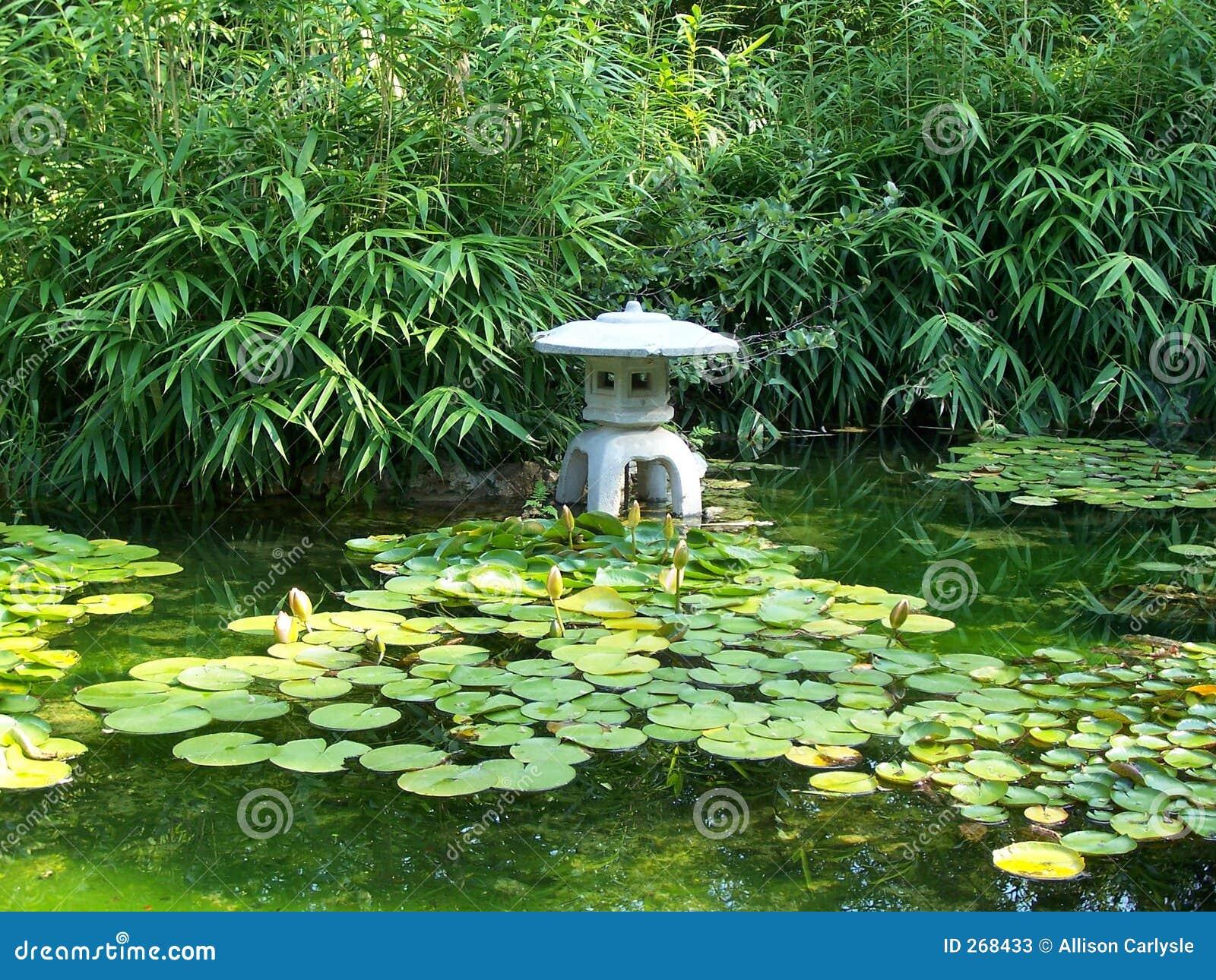 Stagno giapponese di zilker da alliso immagine stock for Stagno giardino