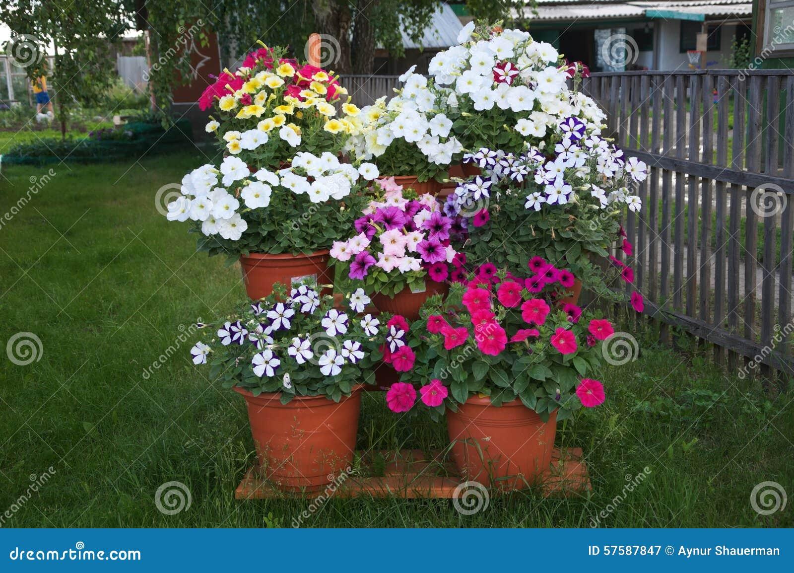 Stair decoration design petunia flower garden stock image for Arreglar un jardin abandonado