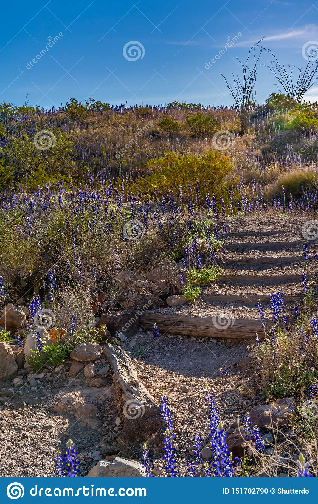 Stairs down into Tuff Canyon with afternoon sun