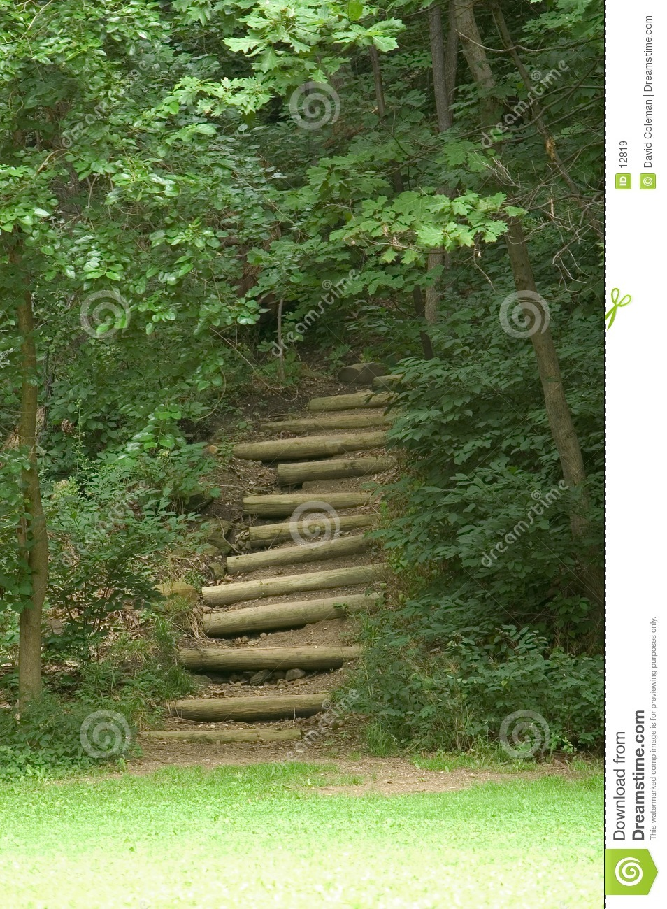 Stairs In The Woods Stock Photo 12819 Megapixl