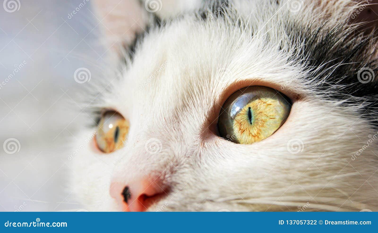 Staken de grote gele ogen van de kat omhoog met licht aan