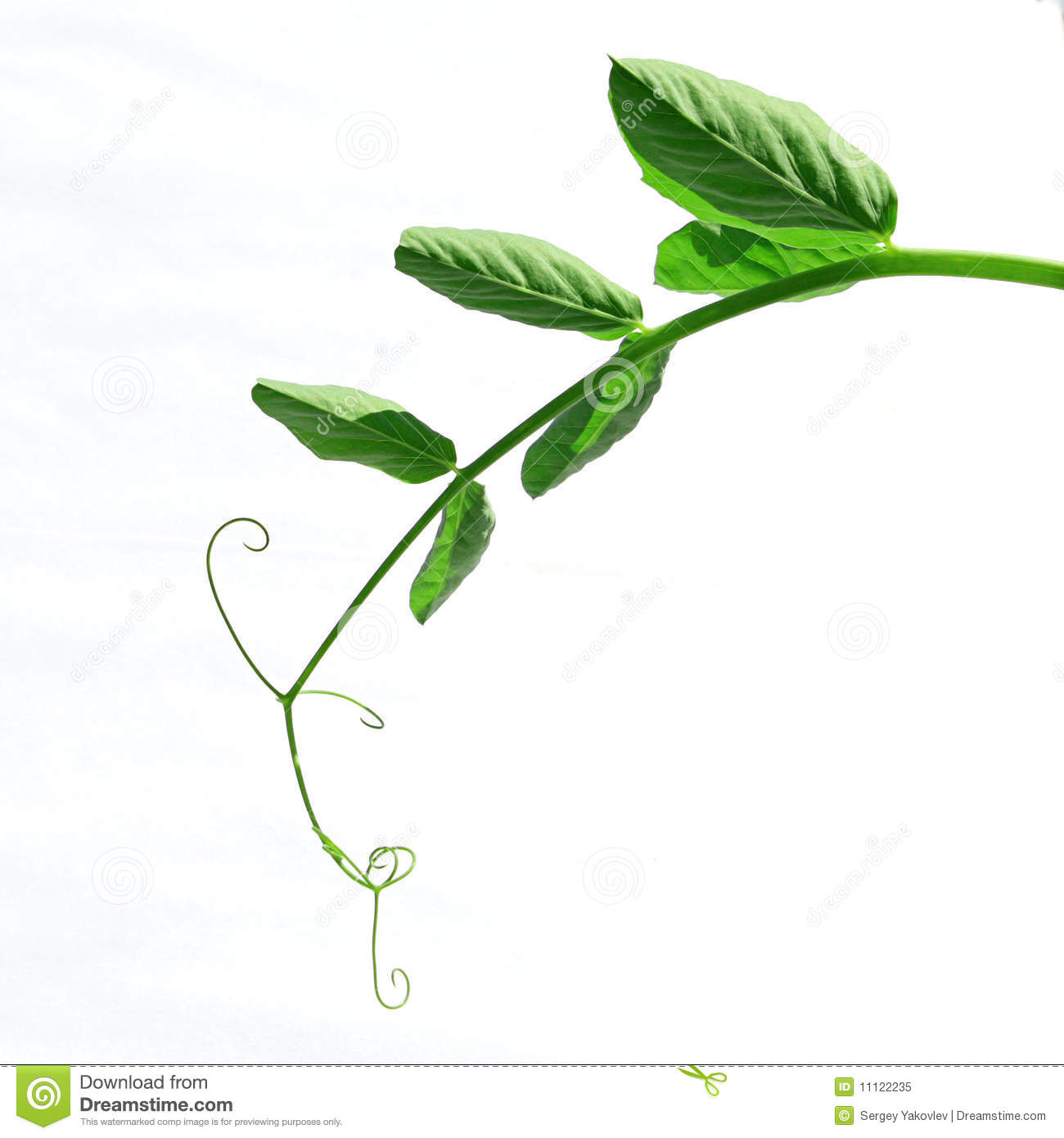 stalk of the plant royalty free stock photo image 11122235