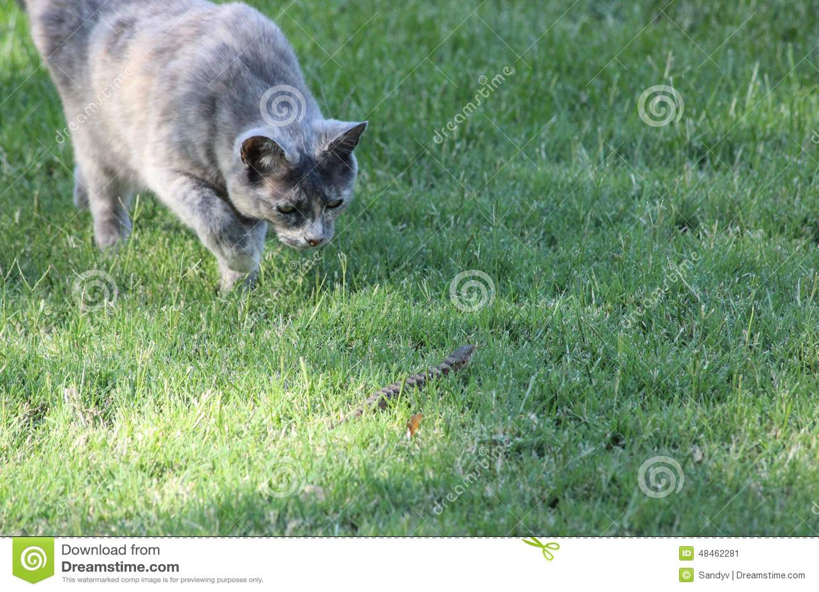 stalking cat stock image image of stalking green housecat